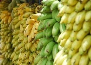 Weiterbildung zum Bananenreifer